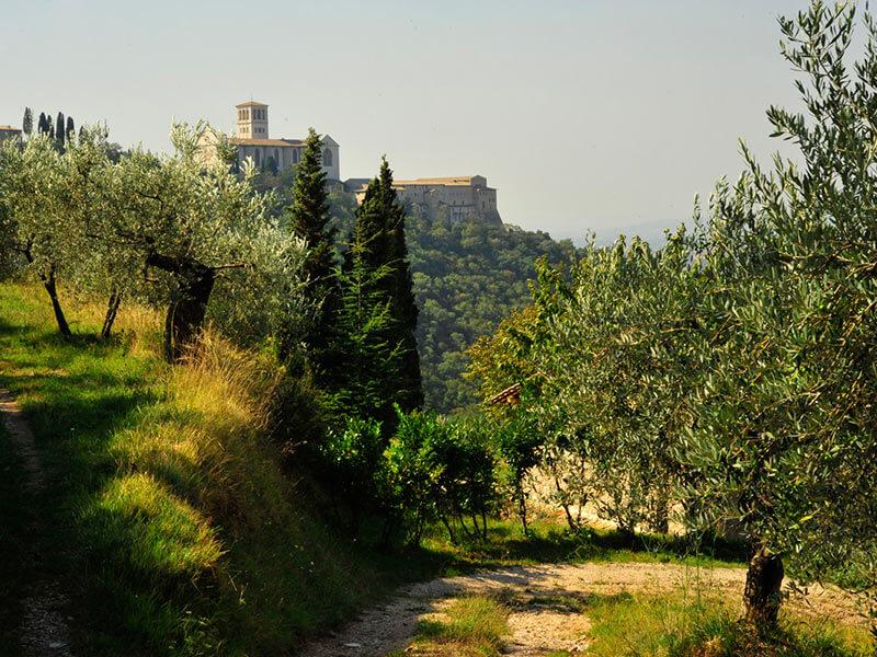 Bosco di San Francesco - Assisi